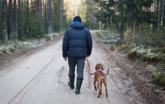 Pora na spacer! Odpowiednia smycz dla psa